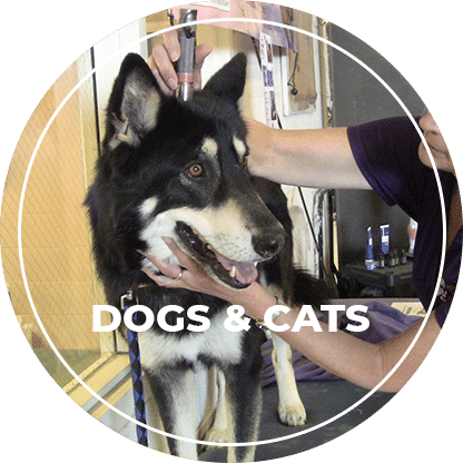 low level light therapy for dogs and cats