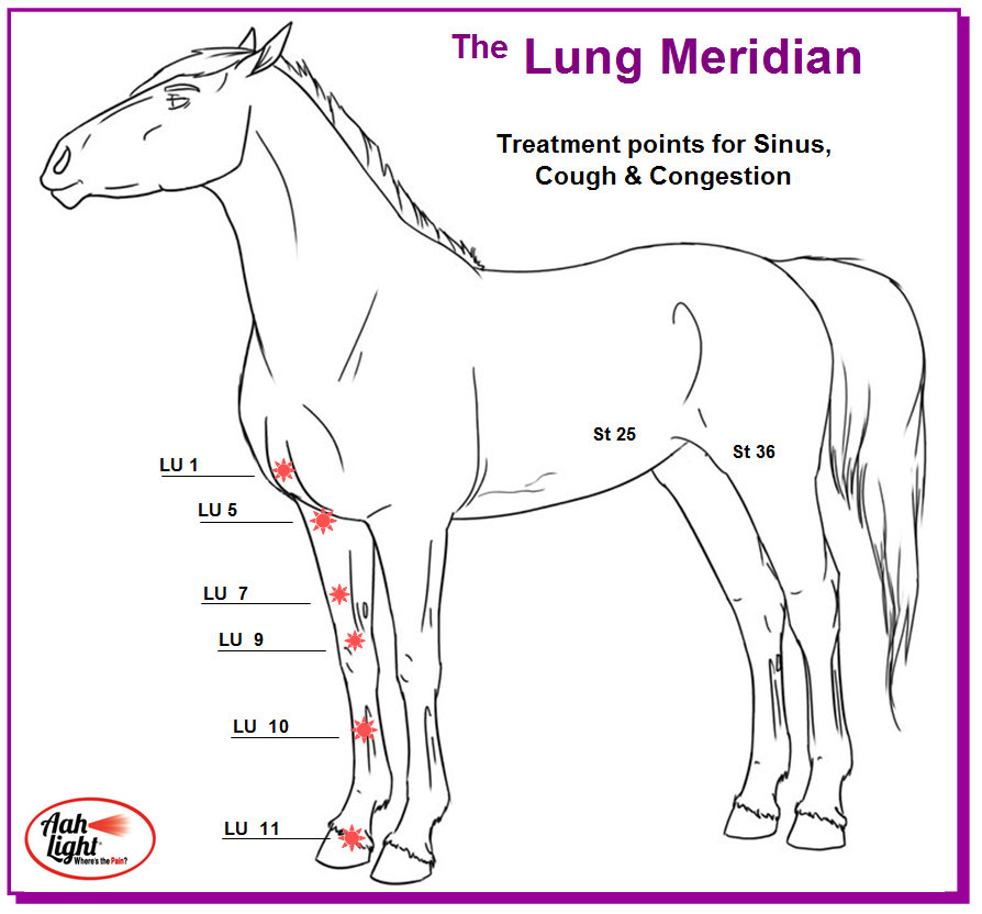lung meridian function