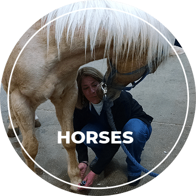 low level light therapy for horses