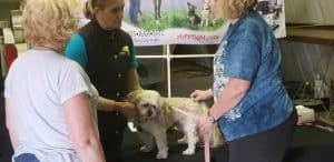 Canine Therapy - Tools for everyday Health @ SK Ranch