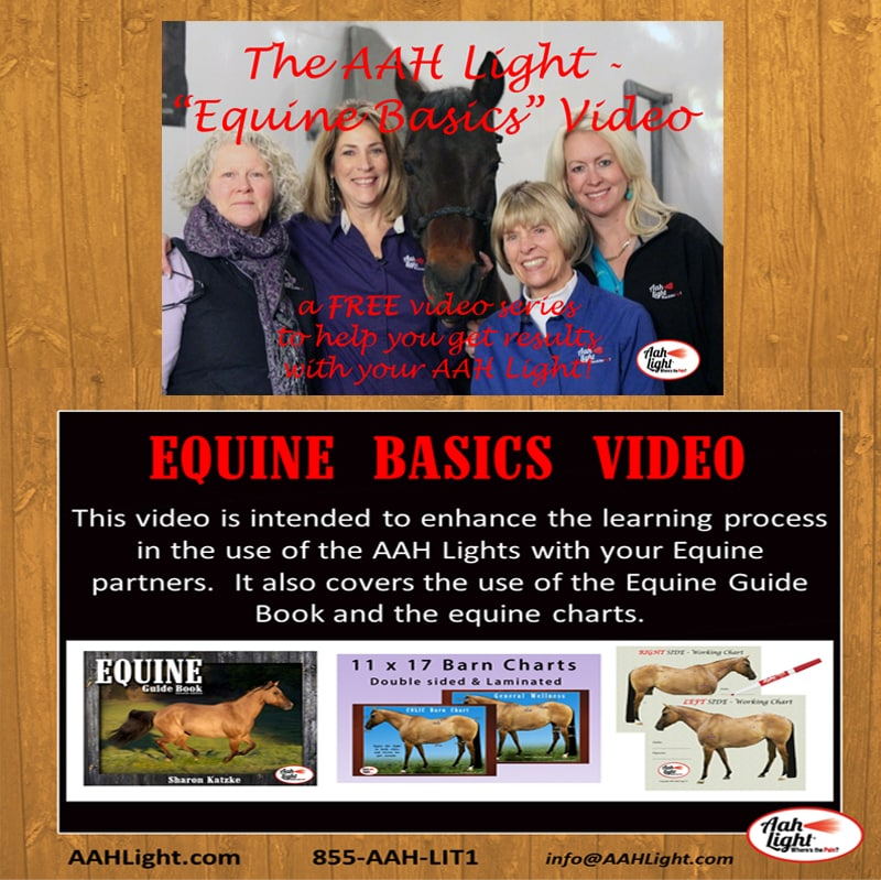 equine horse therapy, equine basics free video, aah light, ahh light, photonic heal