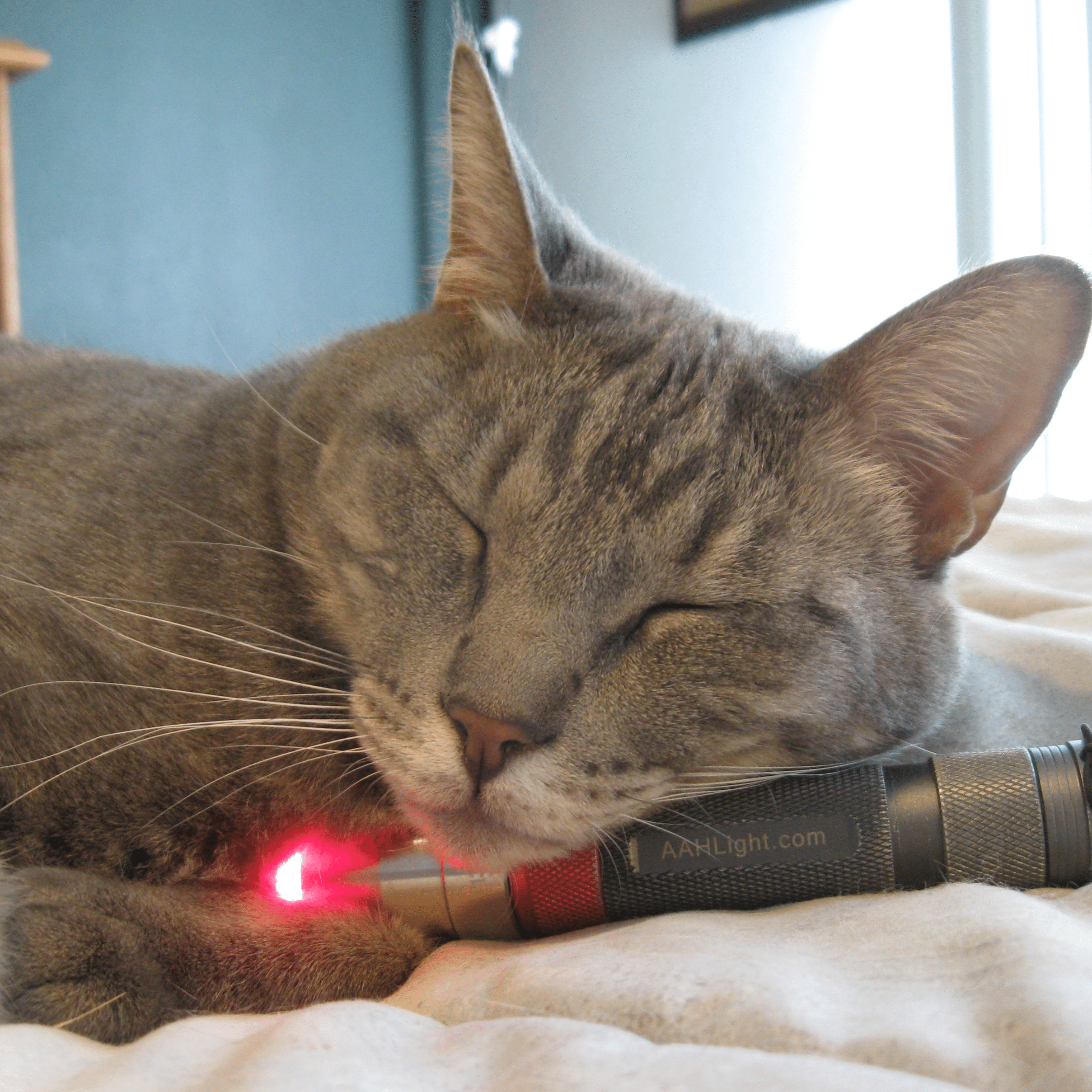 low level light therapy for pets