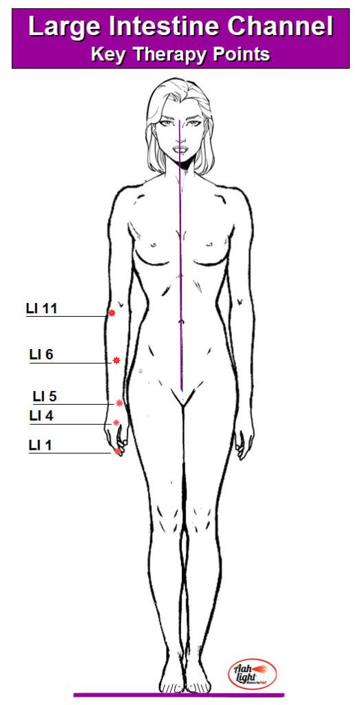 Large Intestine 1