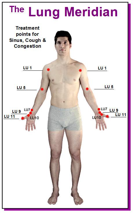 Lung Meridian Human1